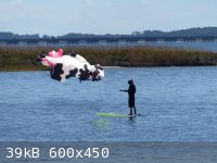 Randy_Flying_Cow_Kite_0.jpeg - 39kB