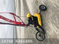 seagull2.jpg - 107kB